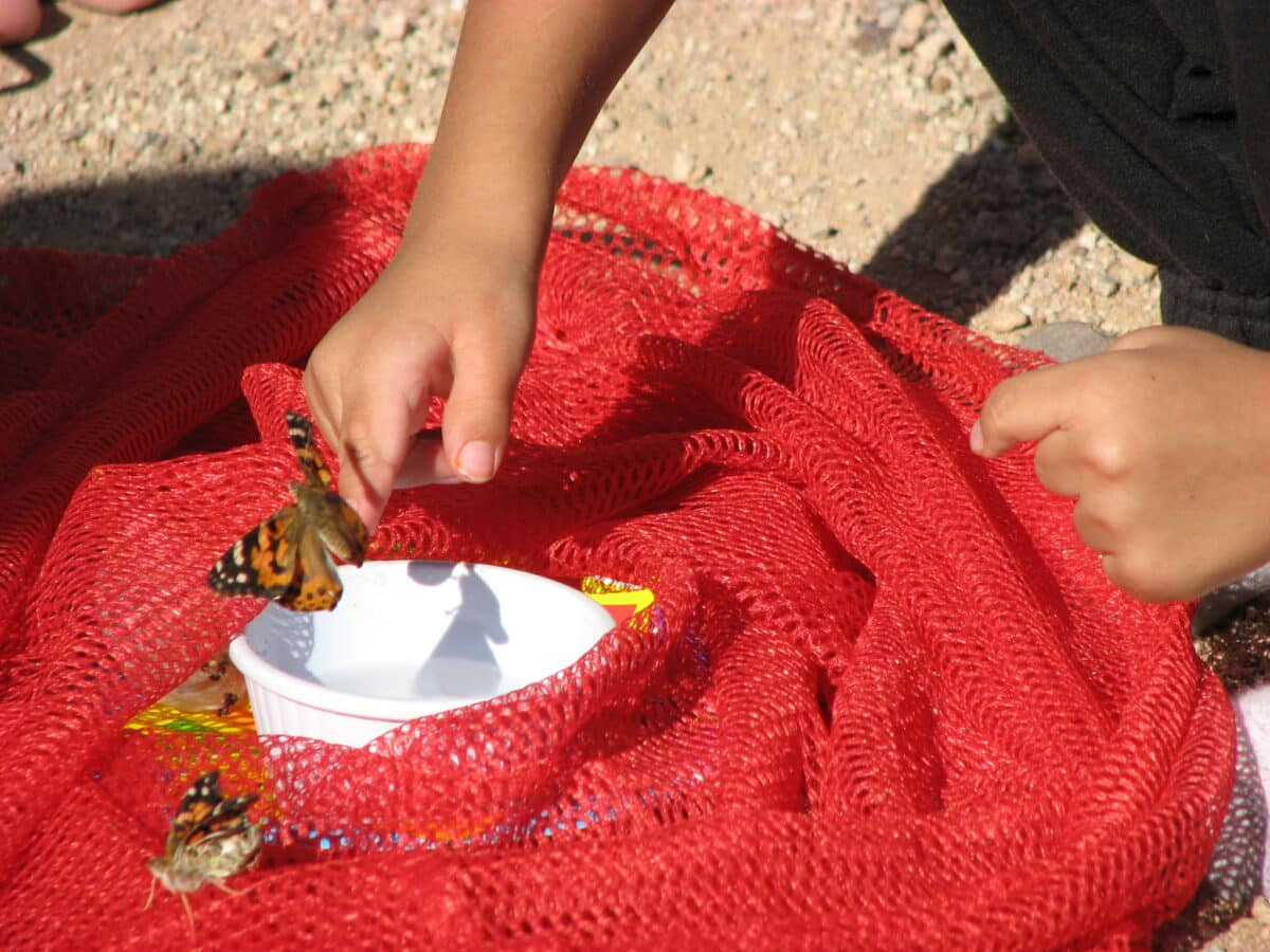 Newly emerged butterfly sitting on a young child's hand