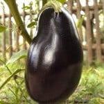 #AtoZChallenge – Eggplant Parmesan