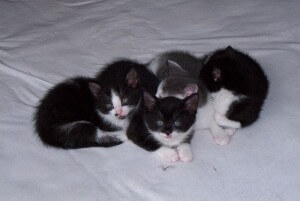 kittens killed by officer